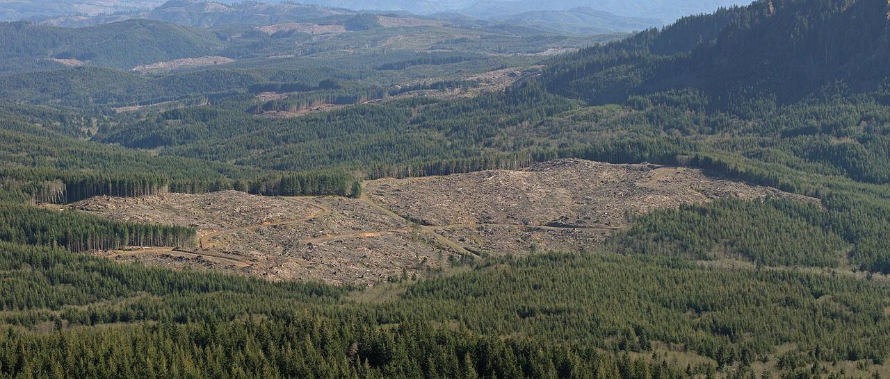 clear cutting global climate change
